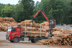 Timber The One Asset Crushing Stocks