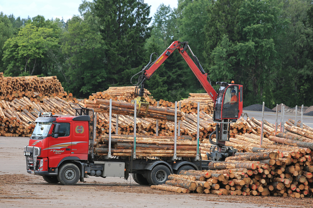 Timber The One Asset Crushing Stocks