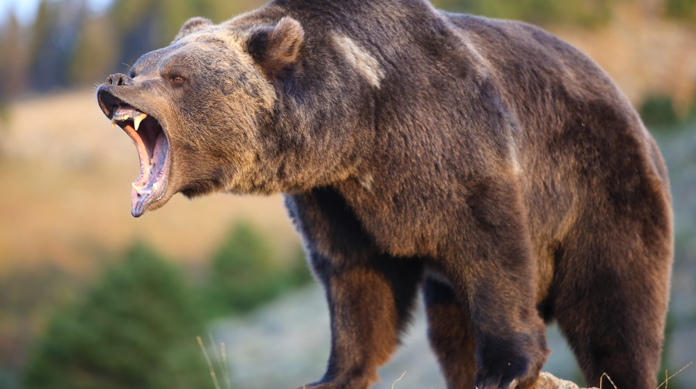 It's impossible to predict exactly when a bear market will start, but there are still strategies you can implement to respect the power of a bear market.
