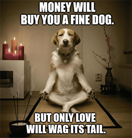 Money will buy fine dog only love wags its tail meme