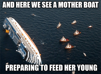 mother boat preparing to feed her young NCLH meme